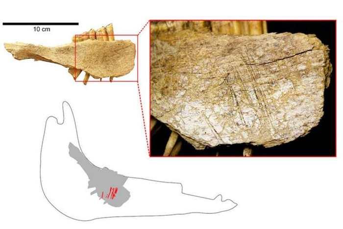 Une recherche suggère que les premiers humains sont arrivés en Amérique du Nord bien plus tôt qu'on ne le pensait. Jusqu'à présent, on pensait que les premiers humains sont arrivé en Amérique du Nord il y a -14 000 ans, mais les nouvelles analyses datent cette arrivée à -24 000 ans.
