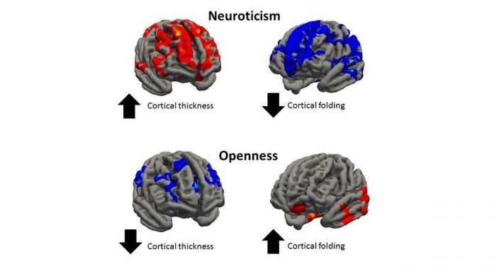 Notre personnalité pourrait être façonnée par le fonctionnement de notre cerveau, mais en fait, la forme même de notre cerveau fournit des indices intéressants sur notre comportement. Cela donne des pistes sur le risque de développer des troubles mentaux.