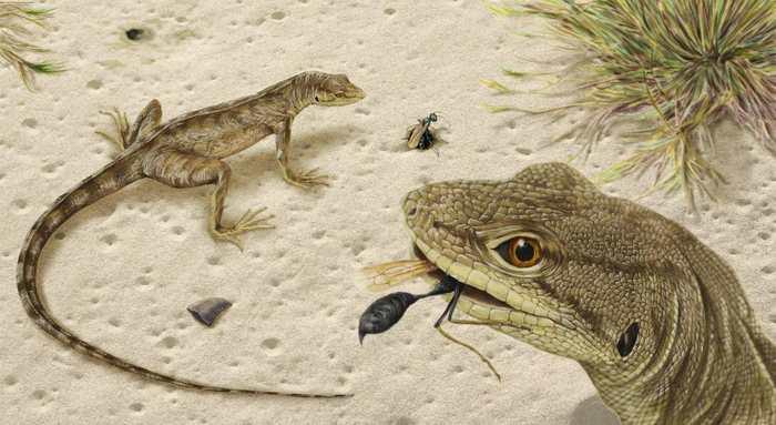 Des paléontologues, qui analysaient des fossiles du Montana, ont découvert une nouvelle espèce de lézard datant de l'ère des dinosaures. Le Magnuviator ovimonsensis nous donne des indices sur la vie des lézards pendant cette période.