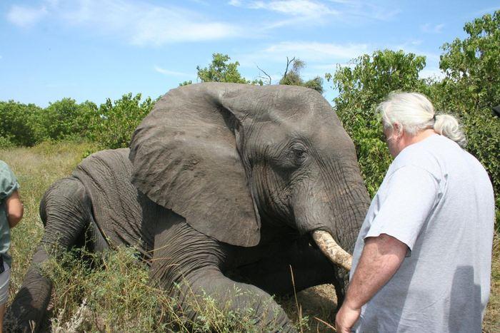 Une recherche suggère que les éléphants africains sont les champions des petits dormeurs puisqu'ils ne dorment que 2 heures par jour, mais ils peuvent aussi passer 2 jours sans dormir. Mais l'étude est très limitée puisque cela ne concerne que 2 éléphants qui ont été surveillés dans la nature.