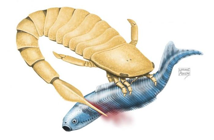 Des chercheurs émettent l'hypothèse sur les Scorpions utilisaient une queue dentée pour propulser et tuer leur proie.