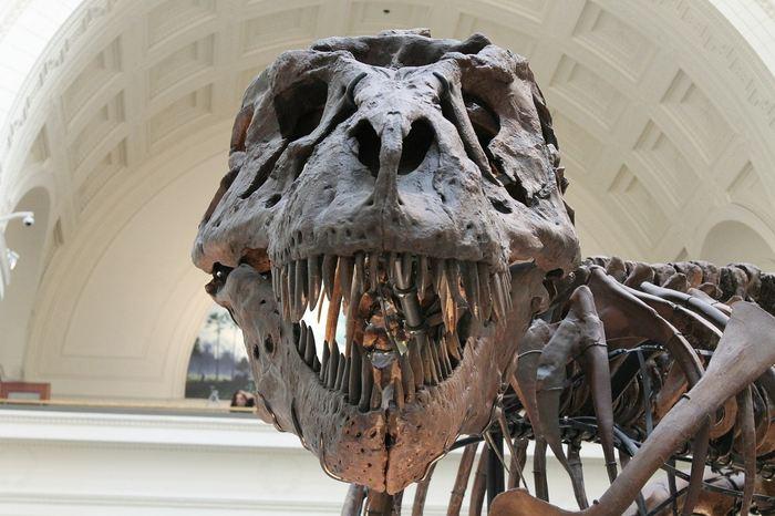 Une nouvelle recherche suggère que le T-Rex avec une force de mesure qui possédait une pression de 3,8 tonnes. Sa pression dentaire est aussi colossale avec 195 tonnes par pouce carré.