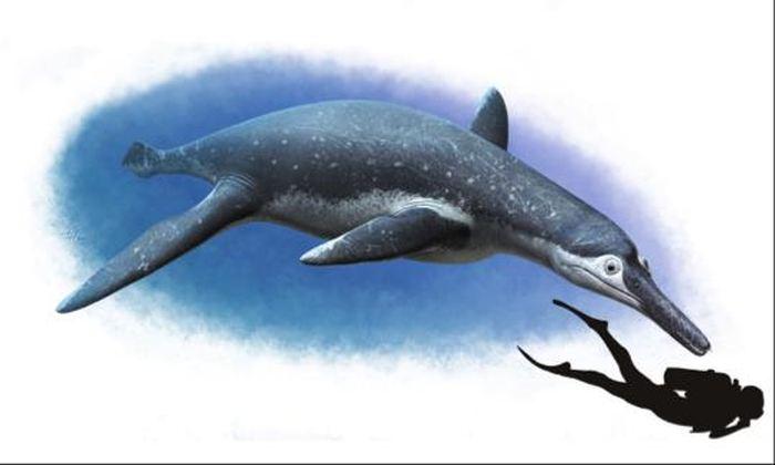 Les chercheurs rapportent la découverte d'une nouvelle espèce de Pliosaure surnommée Luskhan itilensis qui montre des évolutions importantes parmi les plésiosaures.