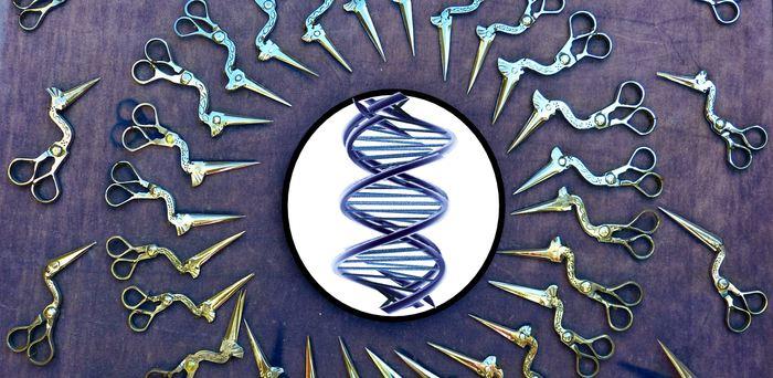 Une étude montrant des mutations non désirées avec la méthode CRISPR-Cas9 a provoqué une baisse de 15 % des actions chez certaines entreprises biotechnologiques.
