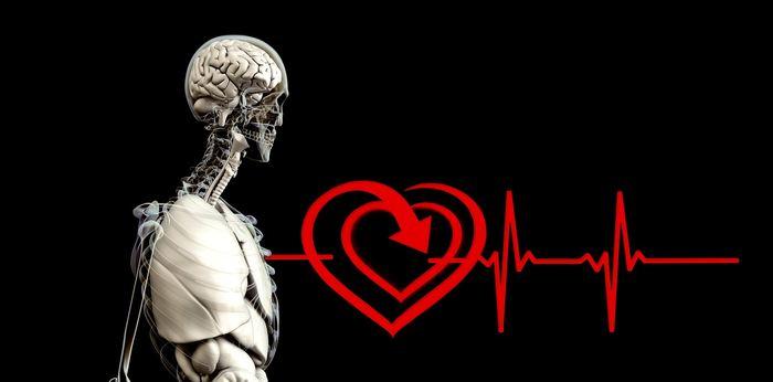 Une nouvelle étude suggère que les gènes associés aux maladies cardiaques favorisent la reproduction. C'est contre-intuitif, mais on vous explique pourquoi.