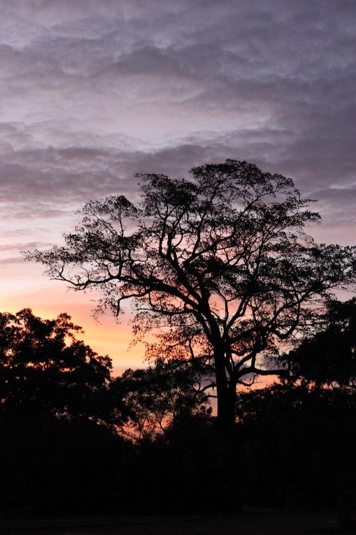 L'ancienne cité de Polonnaurwa dans la zone sèche de la forêt tropicale au Sri Lanka - Crédit : Patrick Roberts