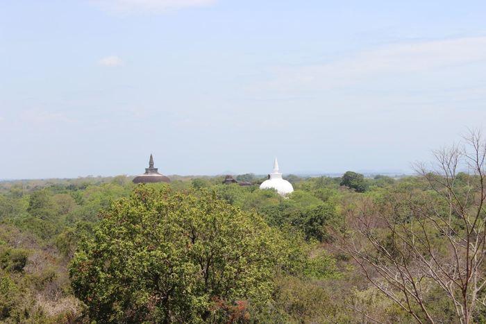 Des Stūpas boudhistes qui s'élèvent de la forêt tropicale à Polonnaruwa au Sri Lanka - Crédit : Patrick Roberts