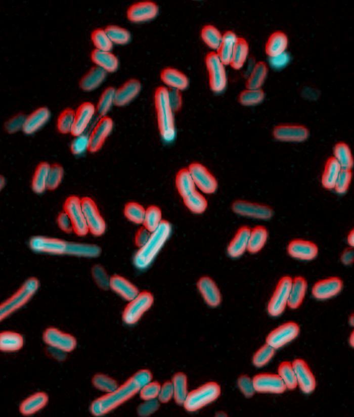 Une recherche suggère que les bactéries peuvent sentir leur environnement via des signaux électriques. Cela ouvre de nouvelles voies de recherche médicale.