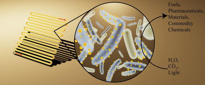 Illustration d'artiste d'un bioréacteur (sur la gauche) chargé avec une bactérie décorée avec du sulfide de cadmium et des nanocristaux absorbant la lumière (au milieu) pour convertir la lumière, l'eau et le dioxide de carbone dans des composés chimiques utiles (sur la droite) - Crédit : Kelsey K. Sakimoto