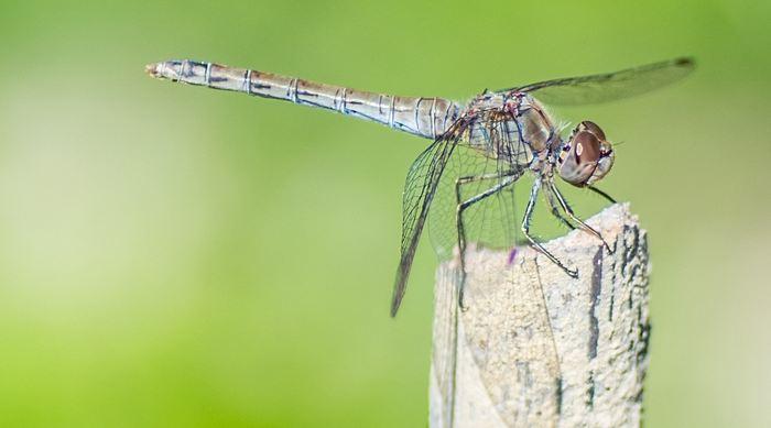 Les chercheurs proposent le concept d'un insecticide qui imite le nectar des plantes afin de l'attirer de manière irrésistible. C'est moins invasif qu'un insecticide classique.