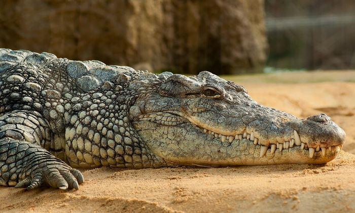 Le prix Ig Nobel 2017 d'économie sur un crocodile et l'impact sur les paris de jeux d'argent
