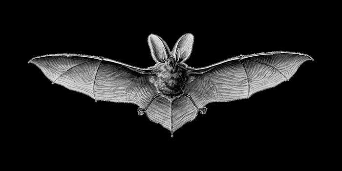 Le Prix Ig Nobel 2017 de nutrition : Des chauves-souris peuvent boire du sang humain