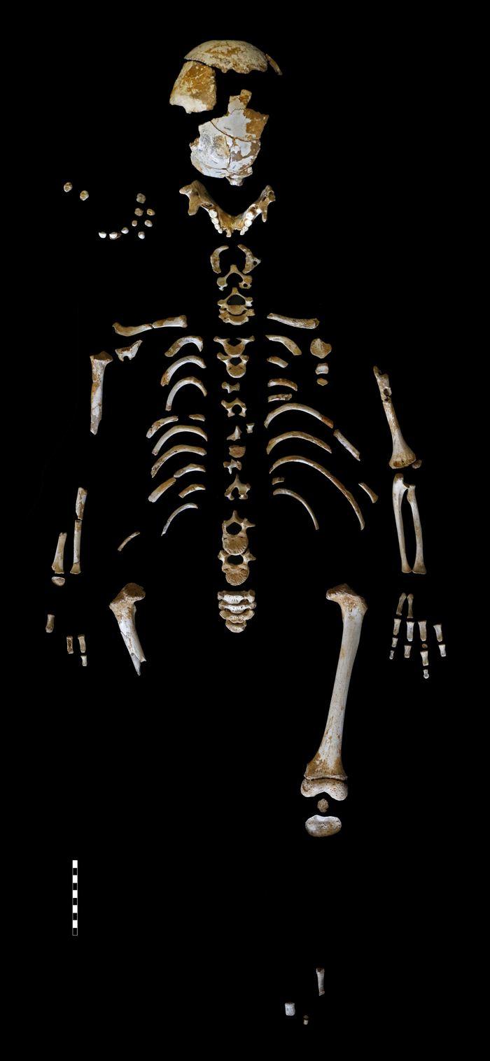 Le squelette d'un Neandertal dans la grotte El Sidrón - Crédit :  Paleoanthropology Group MNCN-CSIC