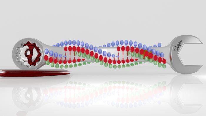 Les chercheurs rapportent la mise au point d'un système appelé REPAIR qui se base sur CRISPR. Cette méthode permet de modifier l'ARN avec un potentiel thérapeutique considérable tout en ayant moins de risques que la modification du génome avec les outils précédents de CRISPR.