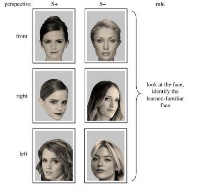L'entrainement pour apprendre les visages humains aux moutons - Crédit : Knolle, F et al
