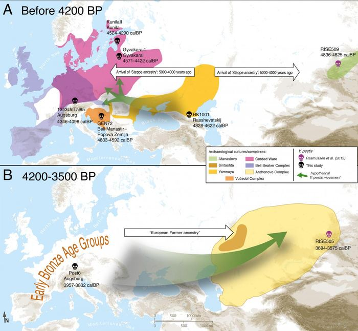 Une carte de la circulation possible du bacille de la Peste à travers l'Eurasie.  A) Entrée de Yersinia pestis en Europe à partir de l'Eurasie central avec l'expansion des éleveurs Yamnaya il y a 4 800 ans.  B) Circulation de Yersinia pestis au sud de la Sibérie à partir de l'Europe. Seules les génomes entiers sont affichés Crédit : Aida Andrades Valtueña. Andrades Valtueña et al. (2017). The Stone Age Plague and its Persistence in Eurasia. Current Biology.