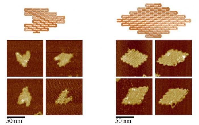 2 structure d'origami ADN en forme de coeur et losange - Biodesign Institute, Arizona State University