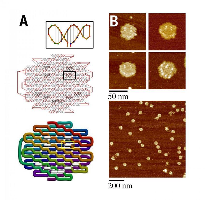 Un origami ADN en forme d'Emoji de visage souriant - Crédit : Biodesign Institute, Arizona State University