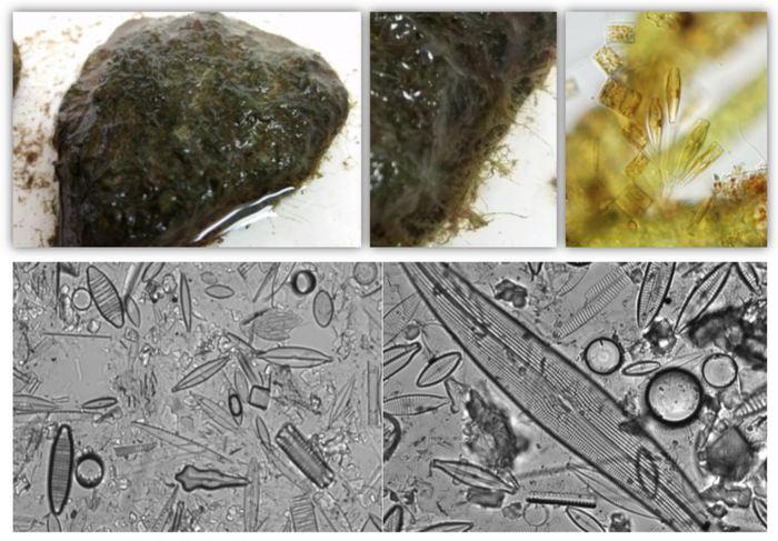Les micro-organismes comme les microbes et les algues se développent dans des revêtements connus comme des biofilms - Crédit : Sylvia Lee