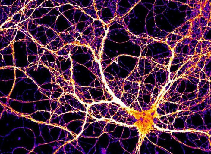 Les chercheurs suggèrent qu'une protéine appelée Arc est importante pour la cognition et la mémoire. Cette protéine a la particularité de ressembler et de se comporter comme un virus quand celui-ci infecte un hôte.