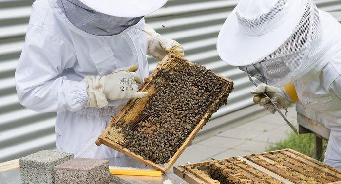 Dans un éditorial, des experts de la protection de l'environnement estiment qu'il faut considérer les abeilles domestiques comme des animaux d'élevage, car elles peuvent participer au déclin des pollinisateurs sauvages à cause de la compétition des ressources. L'effondrement des ruches est un problème agricole tandis que le déclin des pollinisateurs est un problème environnemental.
