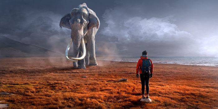 Une équipe internationale de chercheurs a produit l'une des images évolutives les plus complètes sur les éléphants et leurs parents proches avec les mammouths et les mastodontes en s'étendant sur des millions d'années.