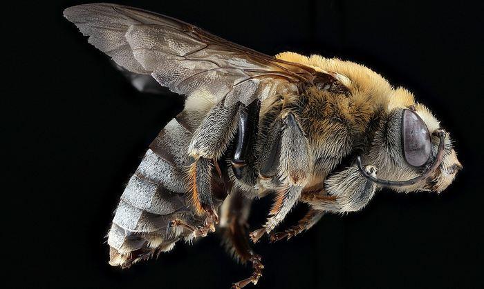 Dans un communiqué, l'EFSA (Autorité européenne de sécurité des aliments) estime que les néonicotinoïdes menacent les abeilles domestiques et sauvages et qu'un renforcement de la législation est à prévoir. Le cas des néonicotinoïdes et son impact sur les abeilles font l'objet d'un débat animé même si ces dernières années, le camp penche vers une menace avérée sous le principe de précaution.