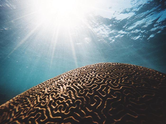 Une étude internationale de Nature Communications, co-rédigée par des chercheurs du Centre d'excellence pour les climats extrêmes (CLEX) et de l'Institut des études marines et antarctiques (IMAS) révèle que les vagues de chaleur ont augmenté au cours du siècle dernier en nombre, en durée et en intensité en conséquence directe du réchauffement des océans.