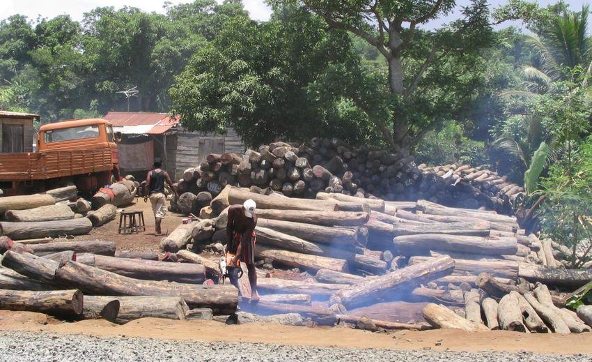 Du bois de rose coupé illégalement à Antalaha à Madagascar le 22 février 2005 - Crédit : Erik Patel, CC BY-SA