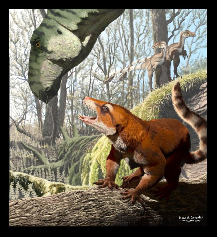 Un petit fossile suggère la preuve que l'ancien supercontinent, la Pangée, a existé bien plus longtemps que prévu. Ce fossile montre aussi une évolution sur les parents proches des mammifères modernes.
