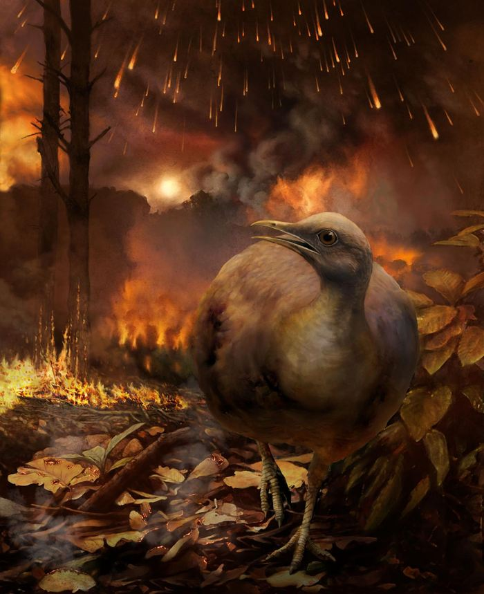 Illustration d'artiste de la survie d'un oiseau après l'impact de l'astéroïde qui a exterminé les dinosaures - Crédit : Phillip M. Krzeminski