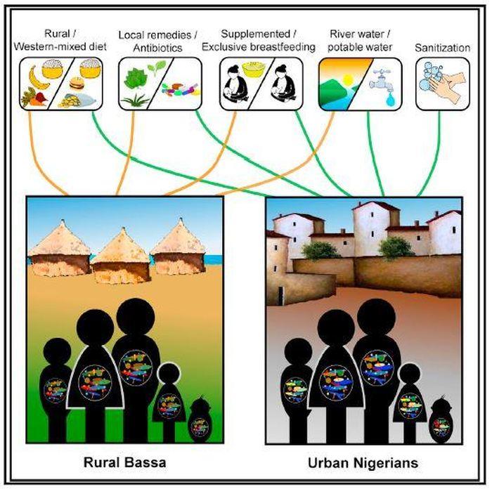 Un graphique qui illustre les différences de microbiome dans les populations nigérianes selon l'alimentation et le mode de vie - Crédit : Ayeni et al./Cell Reports