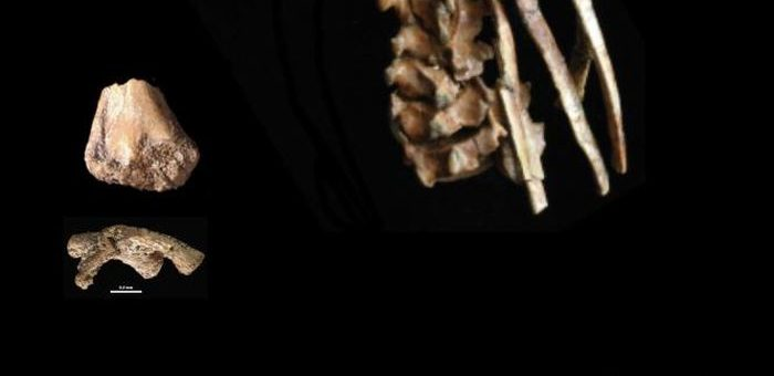 Le pied de Dikika est une partie d'un squelette partiel d'un squelette d'un Australopithecus afarensis âgé de 3,32 millions d'années - Crédit : Zeray Alemseged