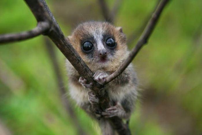 La biodiversité des forêts tropicales de Madagascar - Crédit : D. Bower