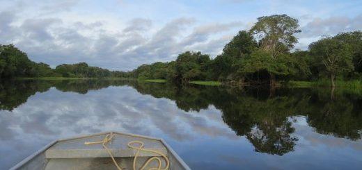 Des communautés anciennes ont transformé l'Amazonie il y a des milliers d'années, cultivant d'une manière qui a eu un impact durable sur la forêt tropicale.
