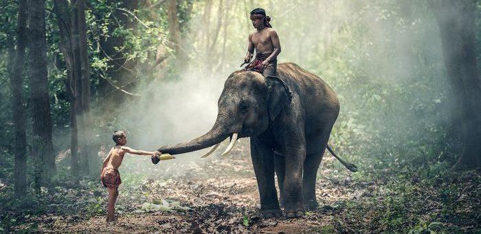 Les éléphants ont développé un moyen de réactiver le LIF6 (un gène inactif chez les mammifères) et c'est ce qui leur permet d'être quasiment immunisés contre le cancer.