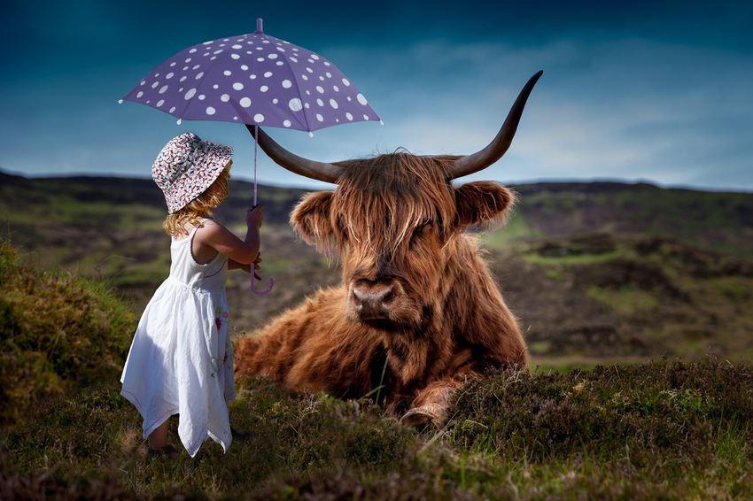 La viande cultivée en laboratoire est promue comment étant plus propre que la viande provenant de vaches. La viande cultivée sera moins impactante pour l'environnement. Mais comme d'habitude, le débat est plus complexe que cette dichotomie et néglige le fait que les vaches ont un rôle crucial dans la régulation des écosystèmes en plus de servir de hamburgers.