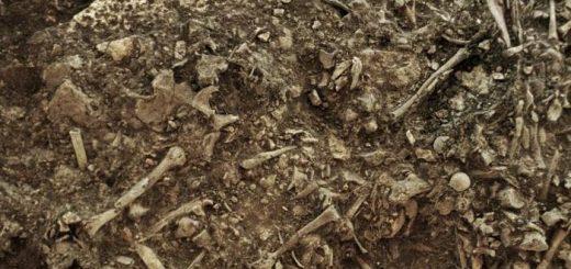 Cette image montre les restes d'une femme de 20 ans (Gokhem2), datés d'environ 4 900 ans. Elle était l'une des victimes d'une pandémie de peste qui a probablement provoqué le déclin des sociétés néolithiques en Europe - Crédit : Karl-Göran Sjögren / University of Gothenburg