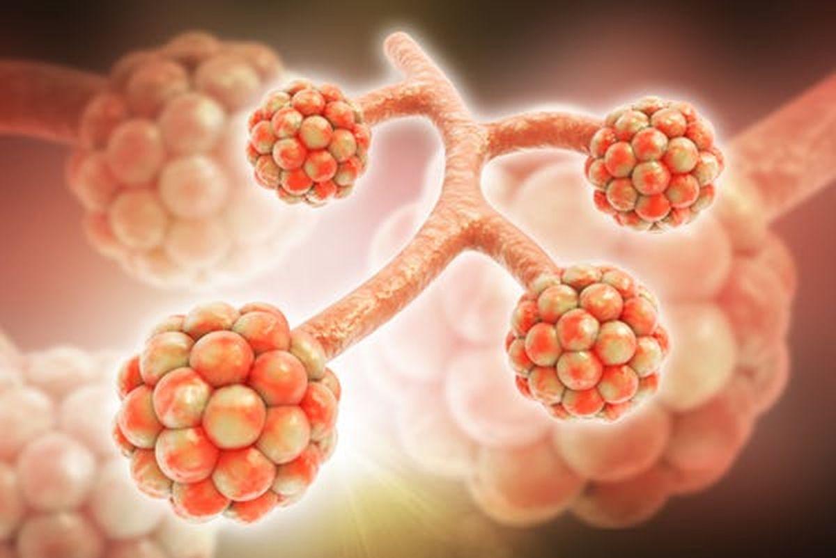 Une illustration 3D des alvéoles. RAJ CREATIONZS / Shutterstock.com