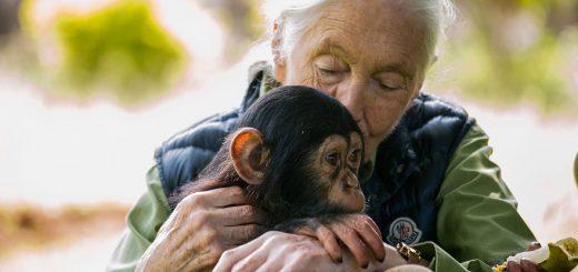 Jane Goodall -Crédit : Sumy Sadurni/AFP/Getty