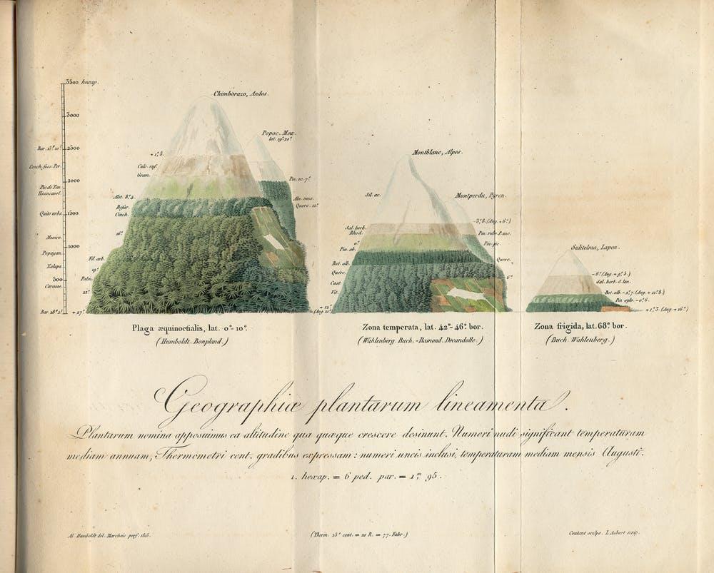 Manuscrit de Humboldt datant de 1817 montrant une répartition géographique des plantes - Crédit : Musée APS