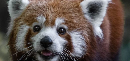 Some announce the death of Firefox because of massive layoffs at Mozilla and the concentration on paid services. But it's arguably the best thing that can happen to him.