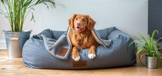 Une étude montre que le CBD soulage les douleurs liées à l'arthrite chez les chiens. Un recherche, pouvant ouvrir la voie vers une application humaine.