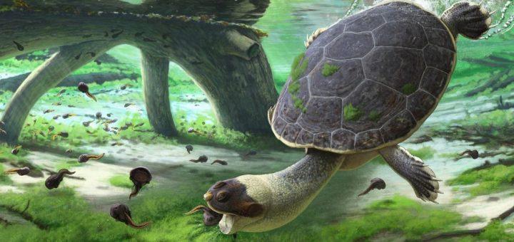 Une nouvelle tortue pélomédusoïde du Crétacé supérieur de Madagascar, appelée Sahonachelys mailakavava, fournit la preuve d'une évolution convergente de l'alimentation par succion chez les pleurodires.