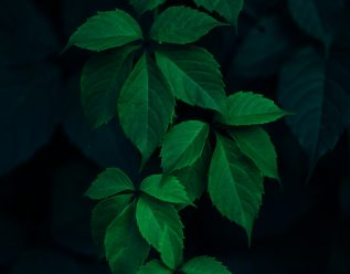 Bilde av blader