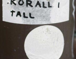 Grisehalekorall i tall