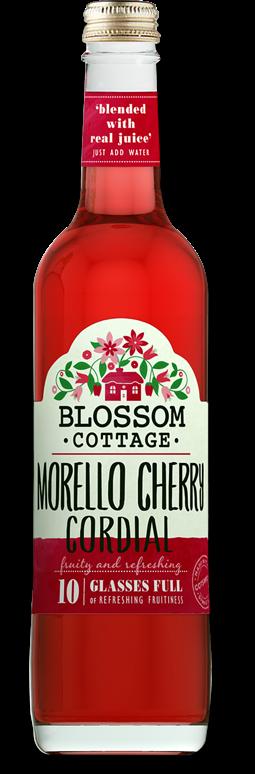BC Morello Cherry Tall