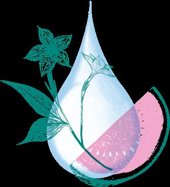 O Water Delicately steam distilled botanical water Illustration WJ