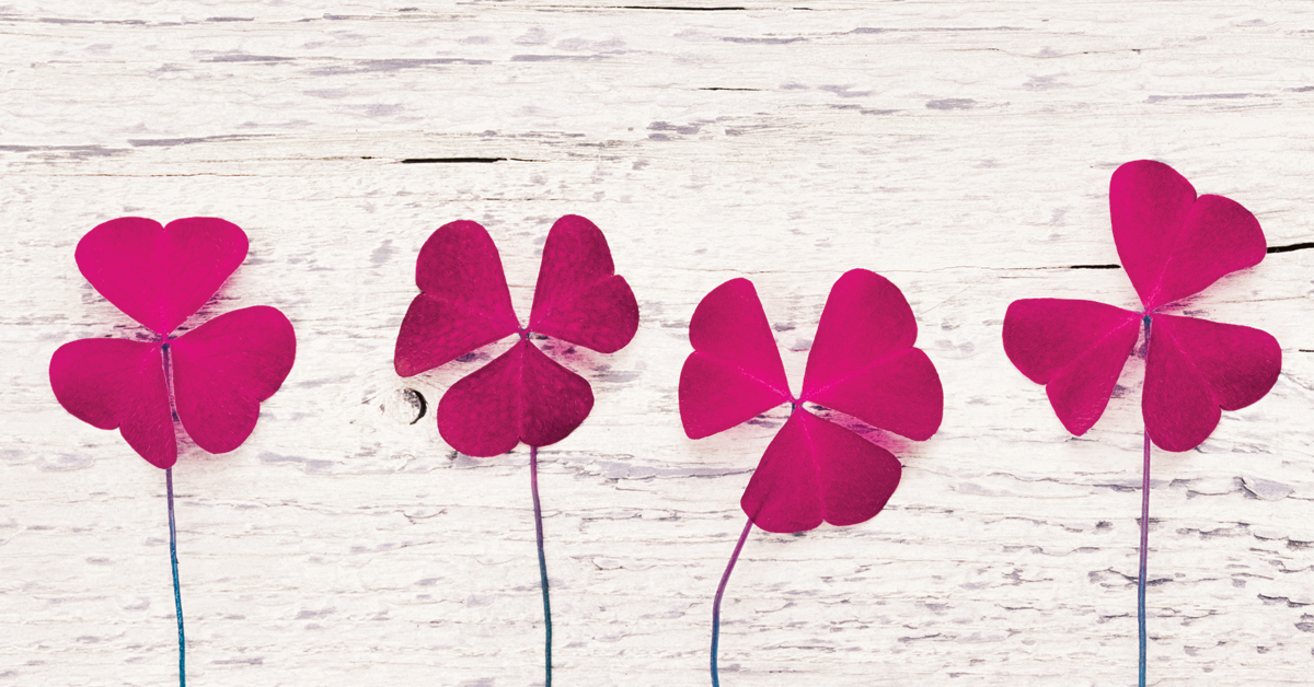 Four pink clover leaves