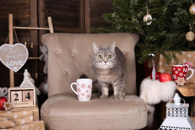 vánoce-kočka-vánoční pohoda